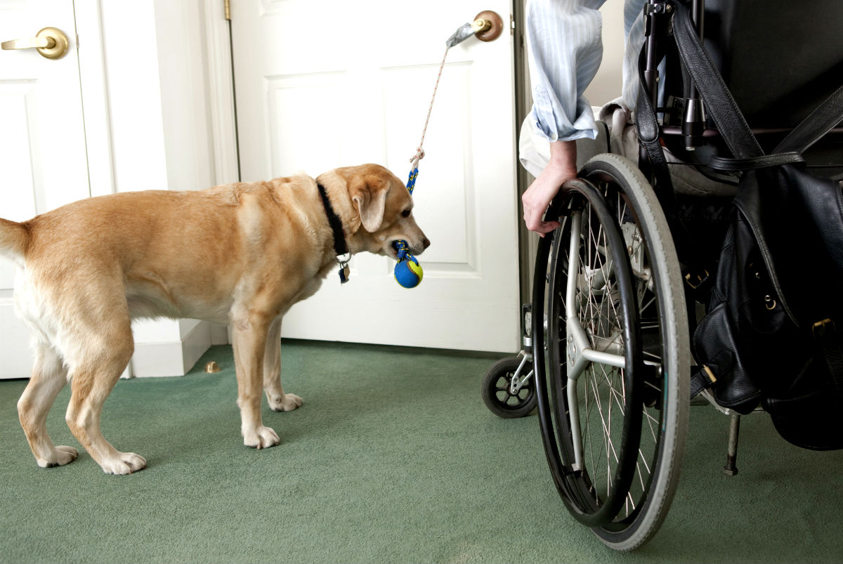 how to get an assistance dog appraised