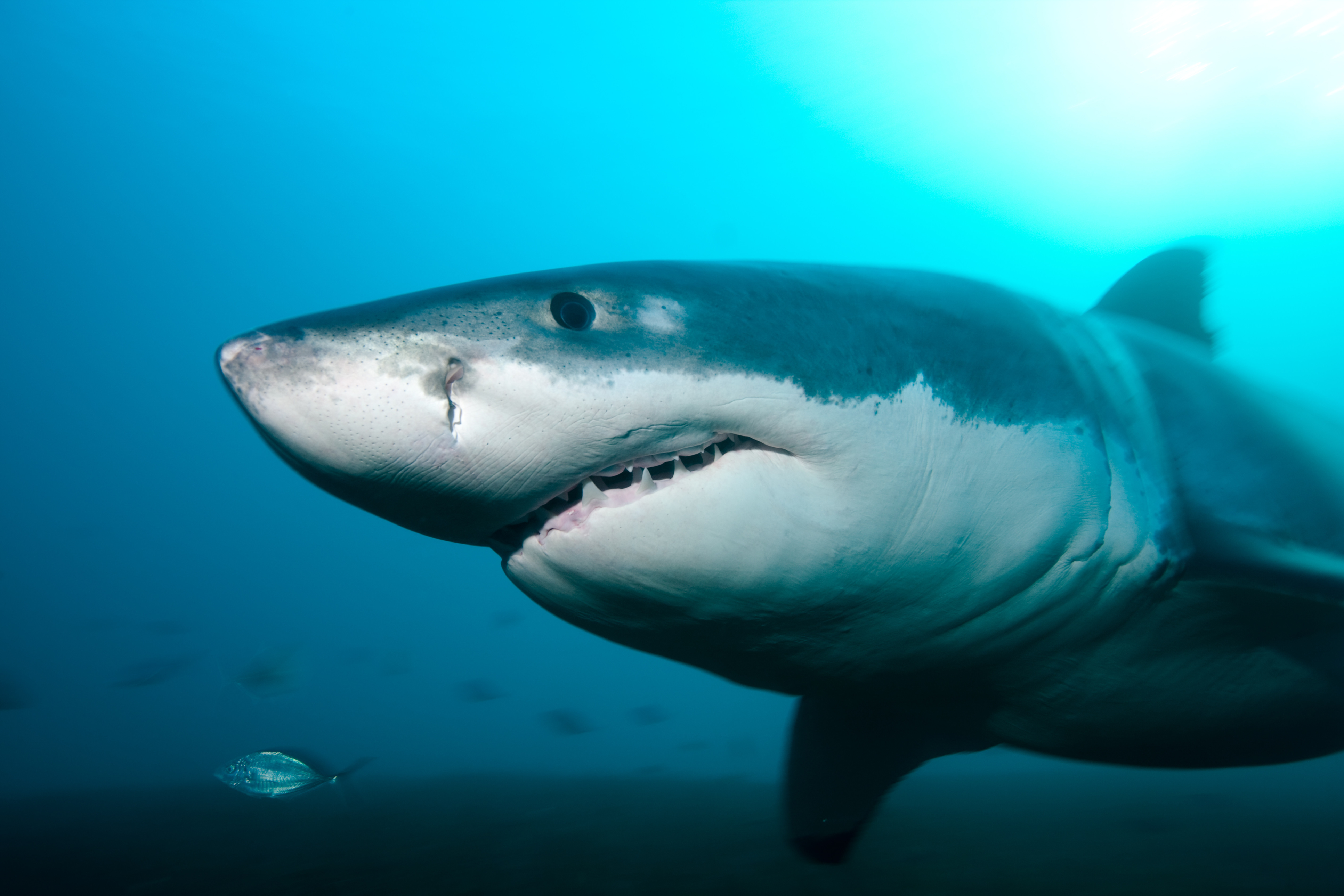 Here S Why Sharks Are Cool Data Mine Us News