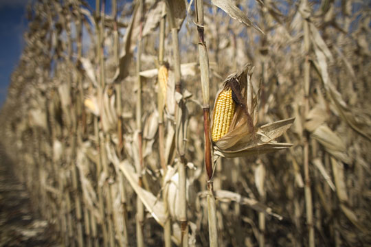 how global warming will hurt crops us news