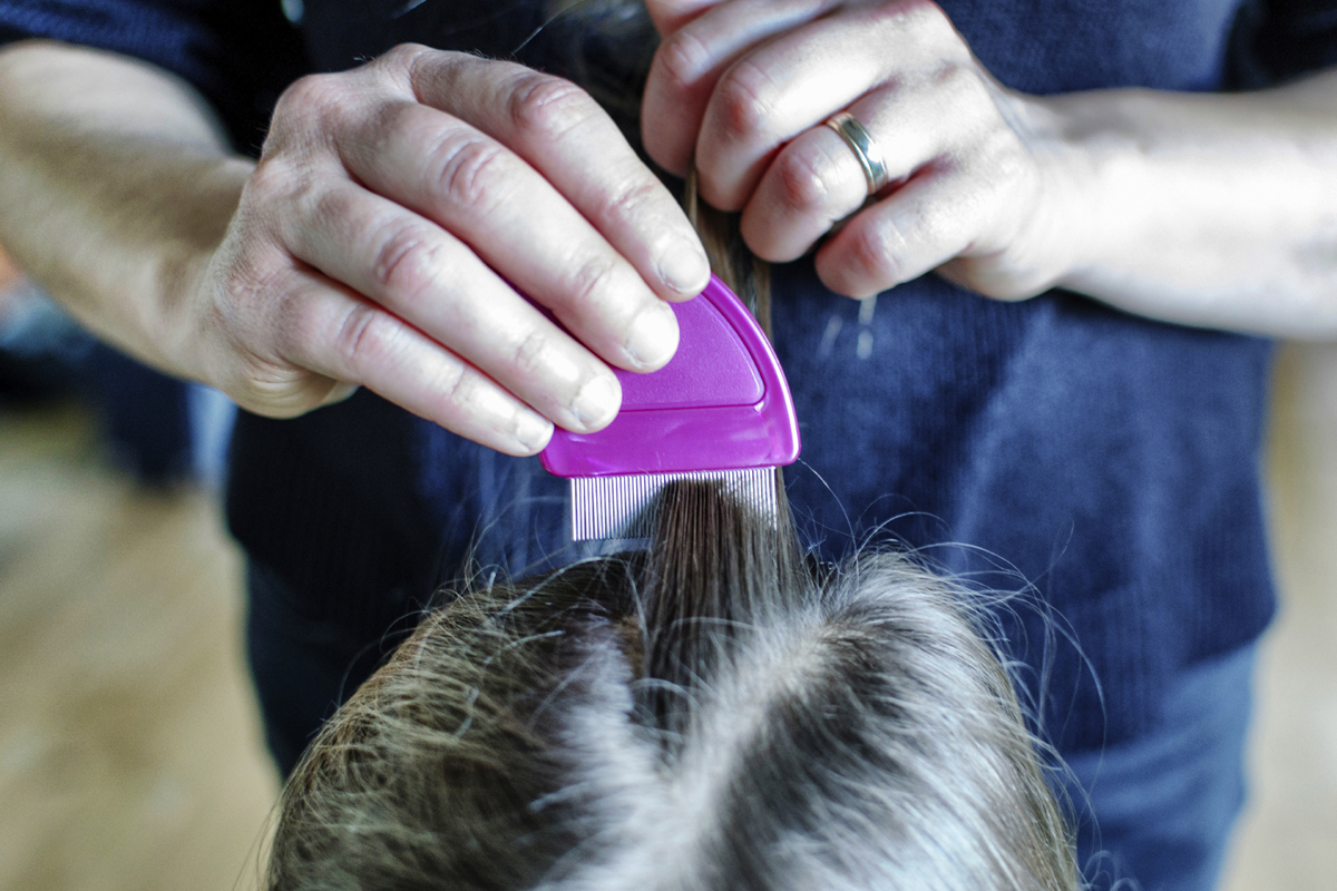 Ways To Treat Head Lice For Better Us News