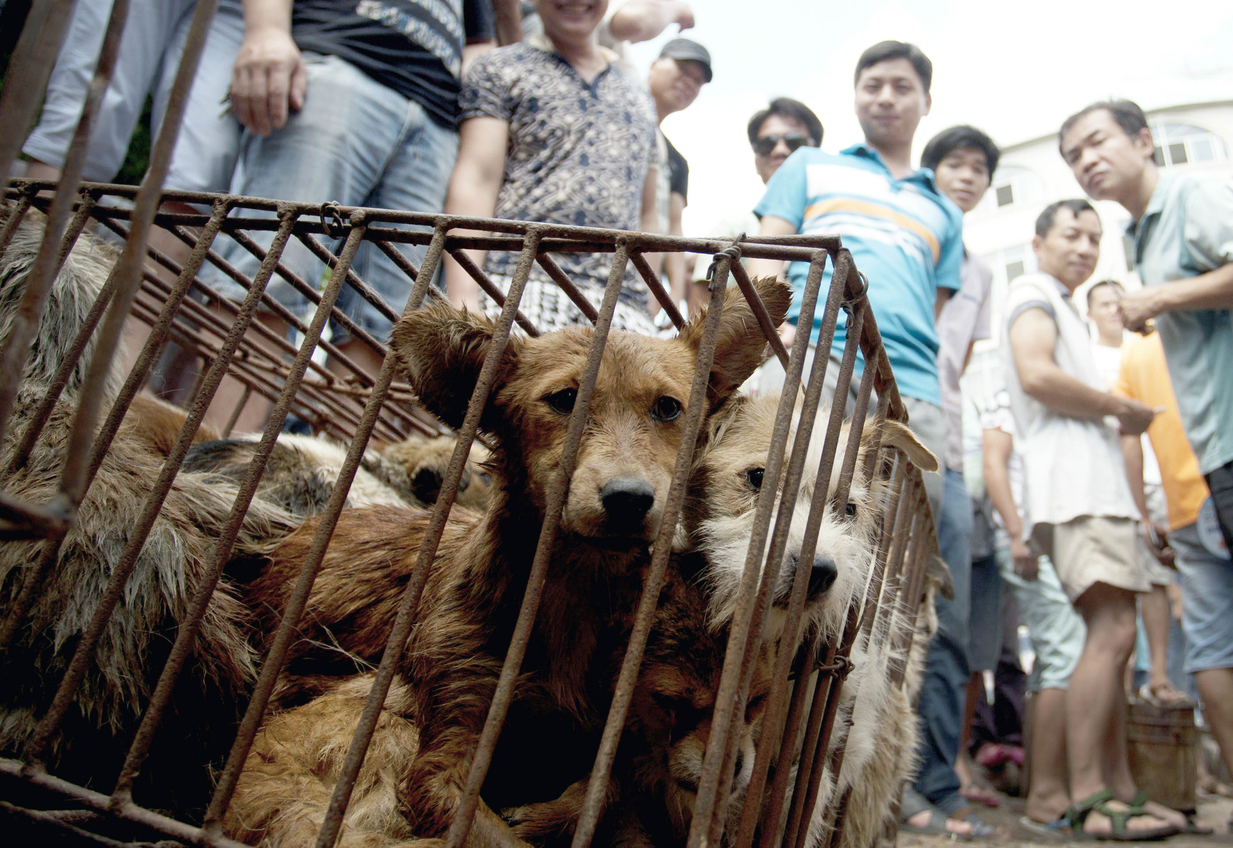 China Dog Meat Festival in Yulin Targeted by Opponents Who ... - photo#10