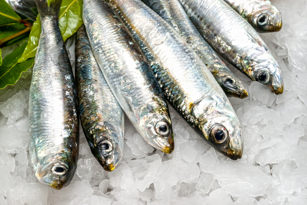 13 best fish high in omega 3s and environment friendly for Fresh fish online